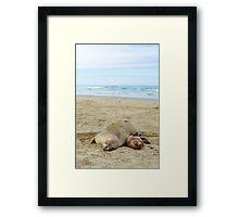 Sea lions Framed Print
