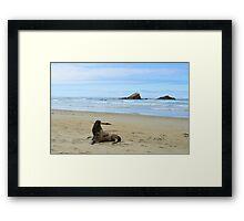 Sea lion Framed Print