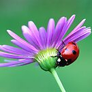 for challenge avatar- Free image LADY BUG by Ann Warrenton