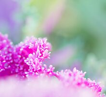 Pinkness III by Josie Eldred