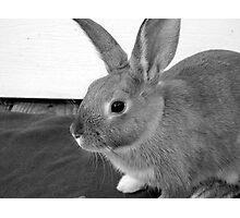 Cadbury the Rabbit Photographic Print