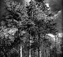 Three Pines by Sheryl Gerhard