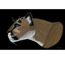 Cougar Portrait Photographic Print