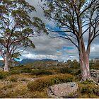 Pinestone Valley, Overland Track, Tasmania by Erik Schlogl
