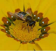 Bee Happy by L Spittall