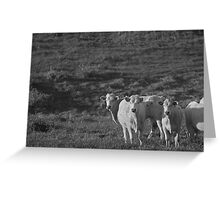 Bovine II Greeting Card