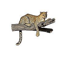 Leopard on a Branch by Emi Brown