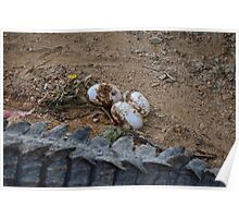 Crocodile eggs Poster