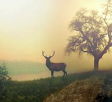 A Misty Morning by Morag Bates