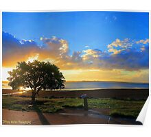 Lonely Little Tree! Poster