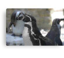 Lone Penguin Canvas Print