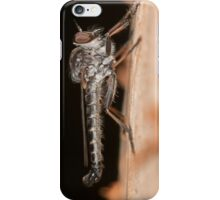 Robber Fly - Ommatius sp. iPhone Case/Skin