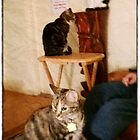 """The Three Amigos, - (t to b) Moire, Mickey, Co Co Kitty (from Kitty City) by Edmond J. [""""Skip""""] O'Neill"""