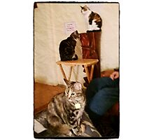 The Three Amigos, - (t to b) Moire, Mickey, Co Co Kitty (from Kitty City) Photographic Print