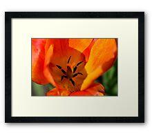 Macro Orange Flower Framed Print