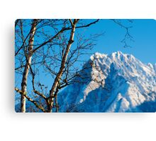 Birch trees and mountain Canvas Print