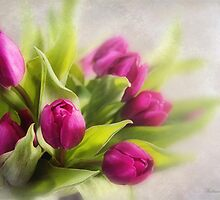 Tulip dreams by Katharina Hilmersson