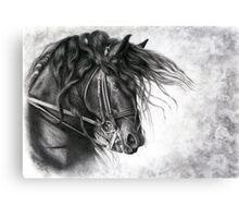 Django of Cacharel - Friesian Grand Prix Dressage Horse Canvas Print