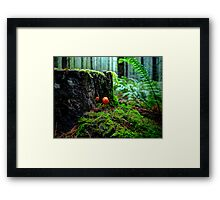 Small But Tough ~ Wild Mushrooms ~ Framed Print