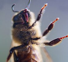Honey bee up close and personal by Martyn Franklin