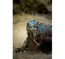 Handsome Iguana Photographic Print