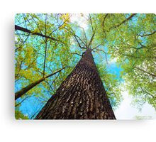Climb the Highest Tree Metal Print