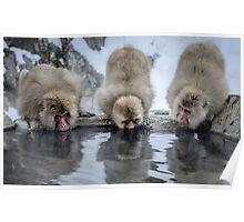 Three Snow Monkeys Poster