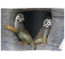 Squirrel Monkeys Poster