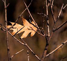One Leaf Left by CarolM