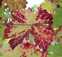 Colorful grape leaf by 2Canons