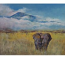 Elephant Savanna Photographic Print