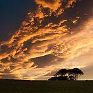 Copse Sunset - County Durham, UK by David Lewins