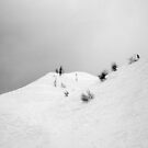 trees in snow II by geophotographic