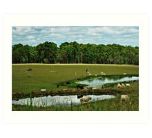 Two dams and green pastures Art Print
