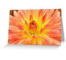 Orange georgina flower closeup Greeting Card