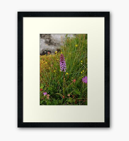 Wild Flowers of The Burren in West Clare Ireland Framed Print
