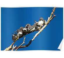 Woodswallow Row Poster