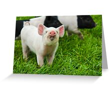 Happy Piggy Greeting Card