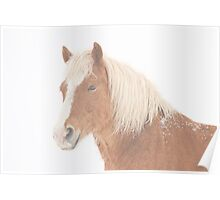 Palomino Horse Headshot Snow and Fog Poster