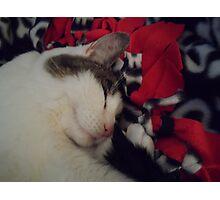 Snuggle Kitty Photographic Print