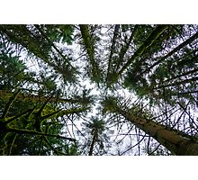 Sometimes just look up Photographic Print