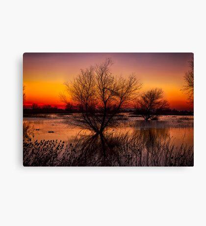 Wetlands Dawn Canvas Print