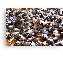 The Pigeon Party Canvas Print