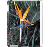 BIRD OF PARADISE IN BLOOM iPad Case/Skin