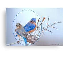 Eastern Bluebird Pair Canvas Print