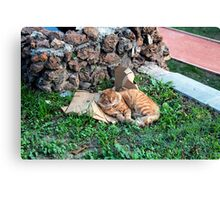 a red cat in istanbul. Canvas Print