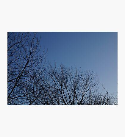 Tree Curve Photographic Print