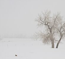 Tree Snow Fog and The Prairie Dog by Bo Insogna