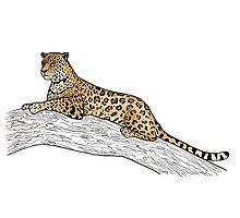 Jaguar by Emi Brown