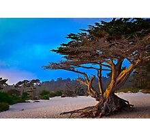 Sunset Cypress Photographic Print